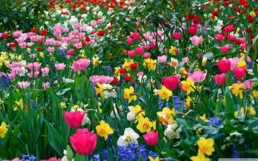3aeb6760e46d18bf7704d33151acac97_spring-flowers-springtime-pics-flowers_2560-1600